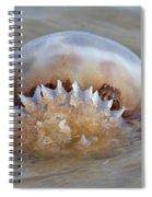 Cabbage Head Jellyfish  Spiral Notebook