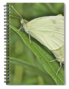Cabbage White Butterflies 5267 Spiral Notebook