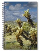 Cactus Also Called Teddy Bear Cholla Spiral Notebook