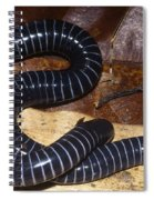 Caecilian Spiral Notebook