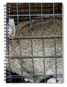 Caged Rabbit Spiral Notebook