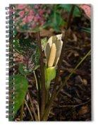Caladium Flower 2 Spiral Notebook