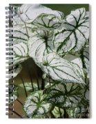 Caladium Named White Christmas Spiral Notebook