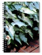 Caladium Shadows Spiral Notebook