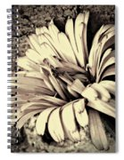 Calendula In Browns Spiral Notebook