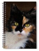 Calico Cat Portrait Spiral Notebook