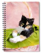 Calico Kitty In Basket Spiral Notebook