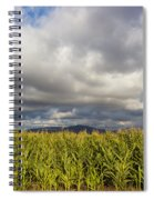 California Cornfield Spiral Notebook