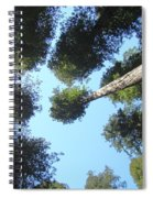 California Redwood Trees Fine Art Prints Forest Spiral Notebook