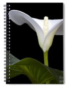 Calla Beauty Spiral Notebook