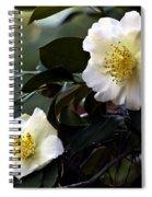 Camellia Nineteen Spiral Notebook