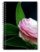 Camellia Twenty-four  Spiral Notebook