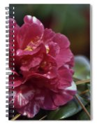 Camellia Twenty-one  Spiral Notebook