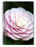 Camellia Twenty-two  Spiral Notebook