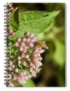 Camphorweed Wildflowers And Honey Bee Spiral Notebook