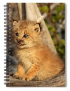 Canadian Lynx Kitten, Alaska Spiral Notebook