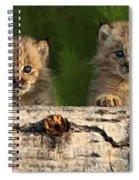 Canadian Lynx Kittens Looking Spiral Notebook