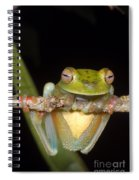 Canal Zone Tree Frog Spiral Notebook