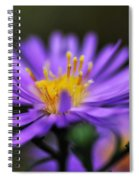 Candles On A Daisy Spiral Notebook