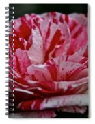 Candy Cane Rose Spiral Notebook