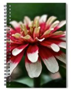 Candy Color Zinnia Spiral Notebook