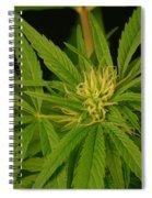 Cannabis Bud Spiral Notebook