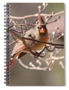 Can't Hide Class Spiral Notebook