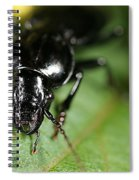 Carabid Beetle Rootworm Rredator Spiral Notebook