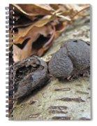 Carbon Balls Fungi - Daldinia Concentrica Spiral Notebook