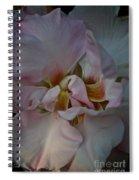 Cardinal Climber Spiral Notebook