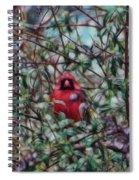 Cardinal Feb 2012 Spiral Notebook
