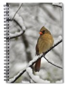 Cardinal Female 3652 Spiral Notebook