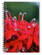 Cardinal Flower Close Up Spiral Notebook