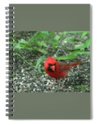 Cardinal In Springtime Spiral Notebook