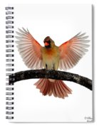 Cardinal Landing On Handle Spiral Notebook
