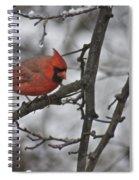 Cardinal Male 3666 Spiral Notebook