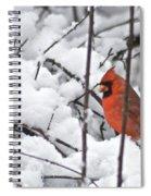 Cardinal Male 3669 Spiral Notebook