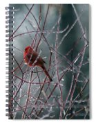 Cardinal On Ice Spiral Notebook