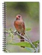 Cardinal On Pope Spiral Notebook