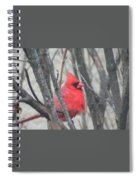 Cardinal With Fluffed Feathers Spiral Notebook