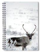 Caribou Rangifer Tarandus Dempster Spiral Notebook