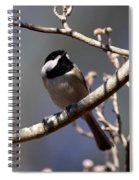 Carolina Chickadee - Glamour Shot Spiral Notebook