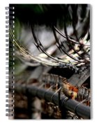Carolina Wren - Secured Spiral Notebook