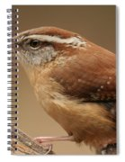 Carolina Wren Spiral Notebook