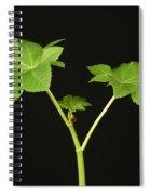 Castor Bean Plant Spiral Notebook