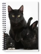 Cat And Rabbits Spiral Notebook