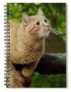 Cat Hanging On A Limb Spiral Notebook