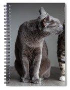 Cat Kiss Spiral Notebook