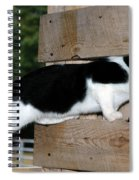 Cat Looking Thru The Knot Hole Spiral Notebook