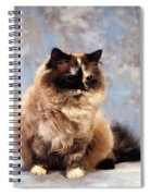 Cat Portrait Of A Cat Spiral Notebook